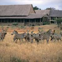 8days>taste of kenya serena safari>kenya package safari