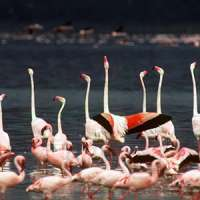 Kenya Dream Vacation >KDV (5 Days)