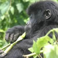 Rwanda private safari>8 days