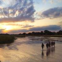 zambia walking mobile safaris