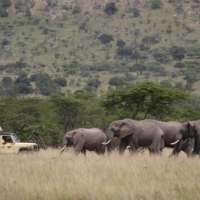 Kilima Vacation Packages>Mada Kenya