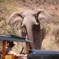 safari & sand luxury package kenya>9 nights sanctuary retreats