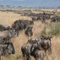 serengeti sanctuary vacation package>3 nights