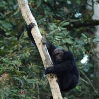 Primates and Birds Safaris in PNV & Nyungwe PBPN 6 Days