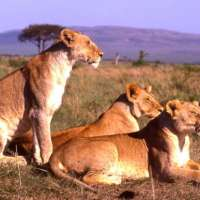 kenya holidays package,kenya comfort>6 nights