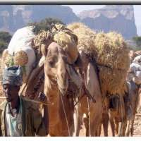 13 Days: Historic route tour Ethiopia> trekking Simien Mountains tour Ethiopia