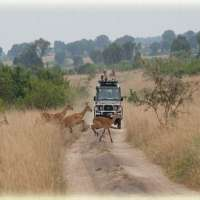 Uganda Game Safaris  ULS (10 Days)>package tours uganda