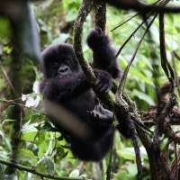 The best of rwanda safari>7days