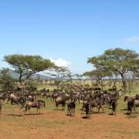 Serengeti tours>Katavi holiday safari>8days>Tanzania