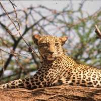 8DAYS SAFARI tours> SOUTHERN TANZANIA package vacation