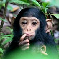 Tanzania Chimpanzee Safari Holidays,Gombe National Park>4 nights