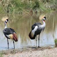 Tanzania Birds and Big Five Safari Package~9days