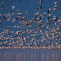 14 days birdwatching in Tanzania>birding tours serengeti tanzania