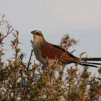 15 days bird watching NorthernTanzania>birding tours arusha