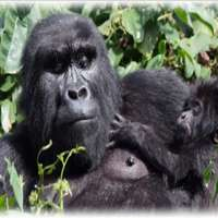 Bwindi short gorilla tours>Nkuringo gorilla tour package~3days