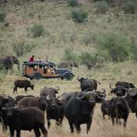 4days>migration safari kenya>safaris in kenya>big 5 safaris kenya>holiday packages kenya