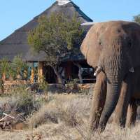 Rhulani Safari Lodge,madikwe game reserve south africa