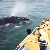 Cape Town White Shark Cage Diving (1 Day)>cage diving tours south africa