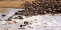 Special Campsites safari in Tanzania>Camping Safari tour Tanzania